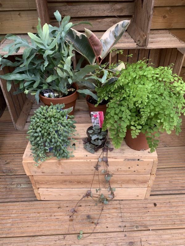 5 X Indoor Plant Mix