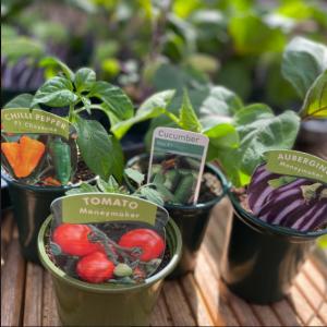 Fruit, Vegetables & Herbs